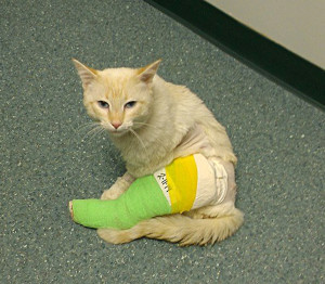 Dodge with his leg casted after his surgery
