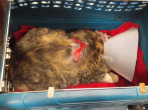 Lily, after Preliminary Treatment for her burn wound